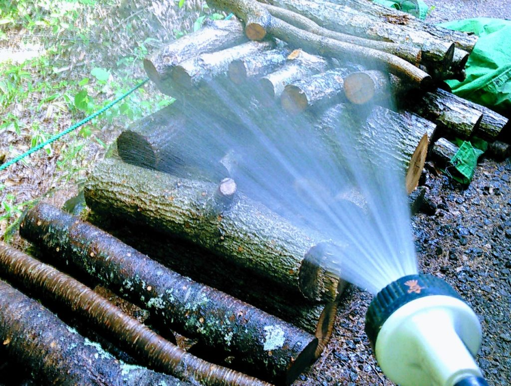 原木の水やり