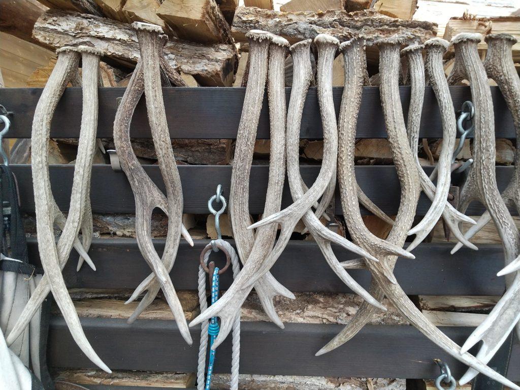 鹿の角コレクション