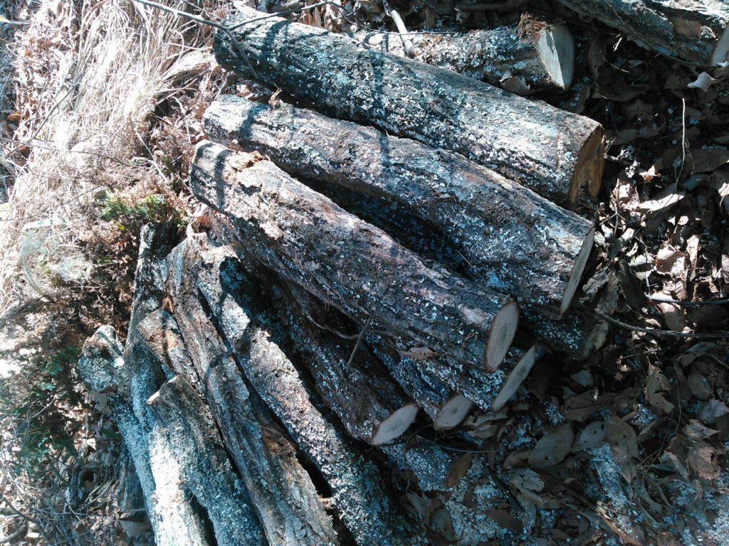 キノコの原木