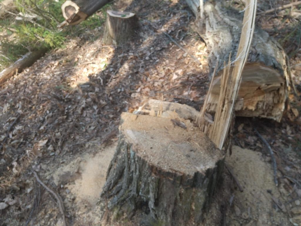 難しい伐採