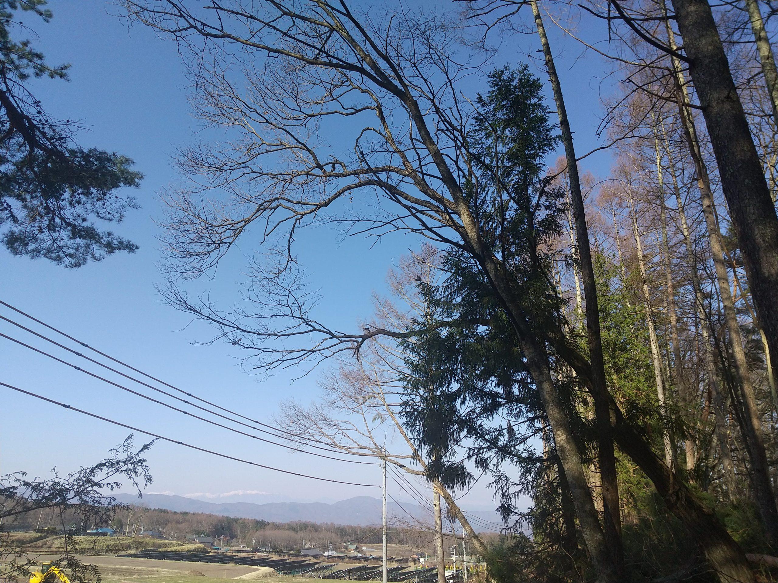 傾いた木の伐採