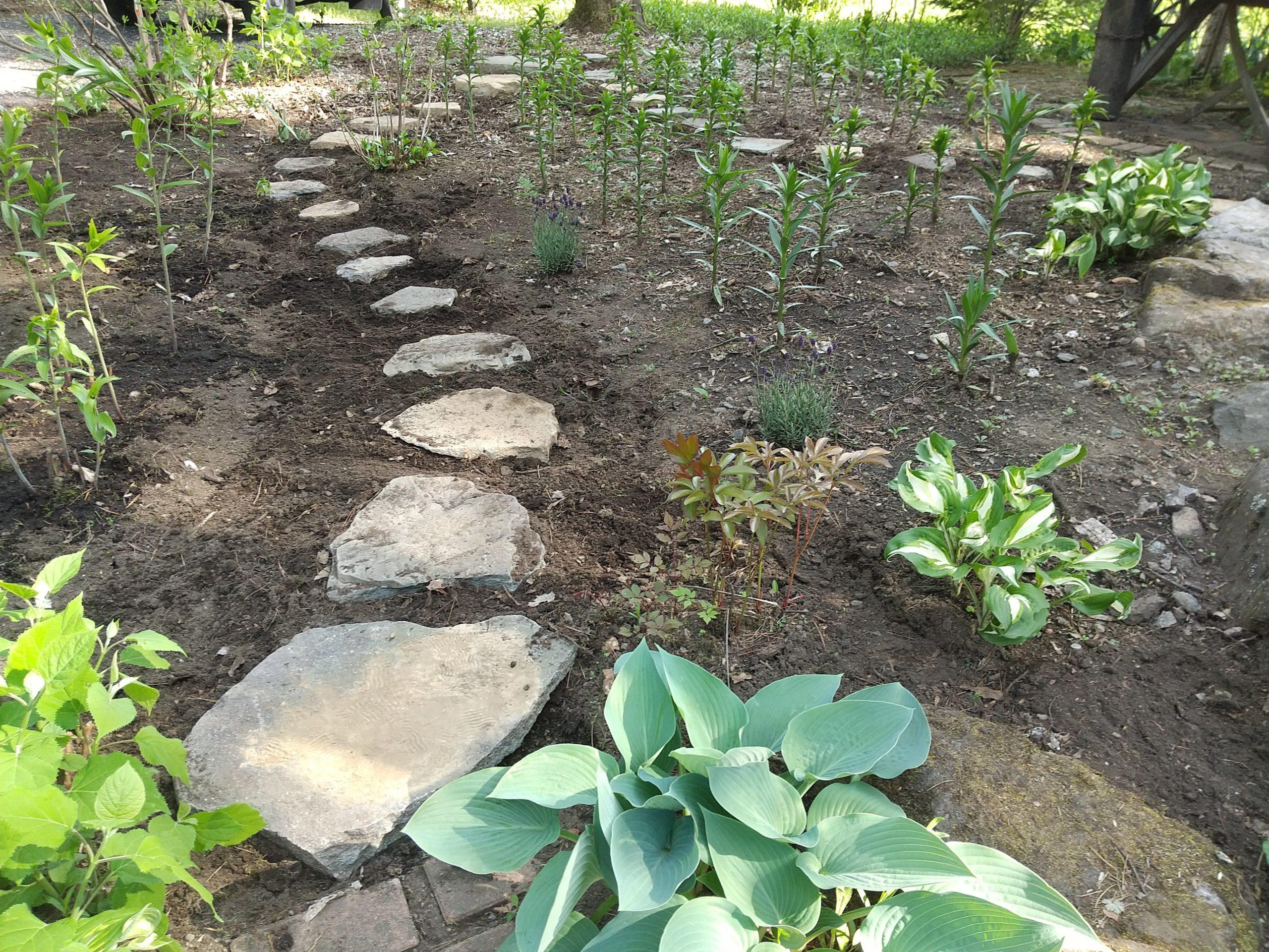 ユリの庭に通路をつくる