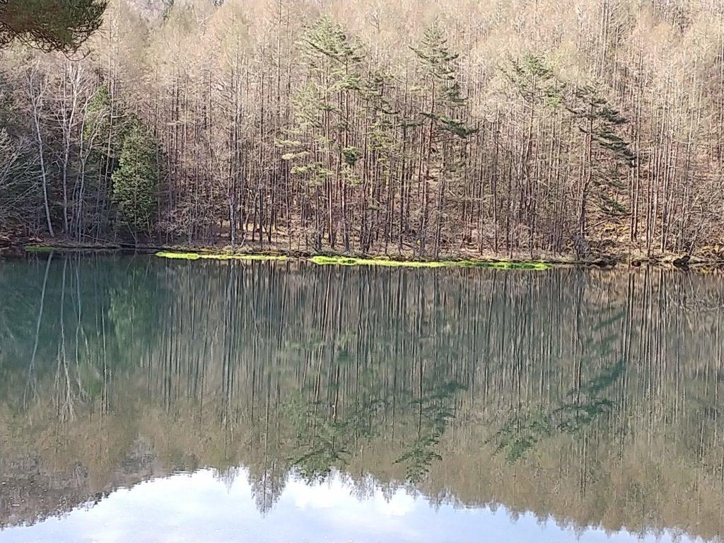 新緑の御射鹿池
