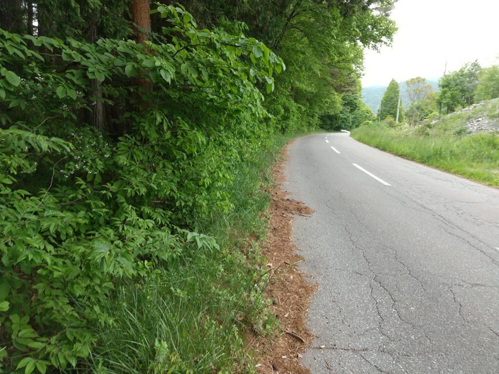 通学路の草刈り作業前