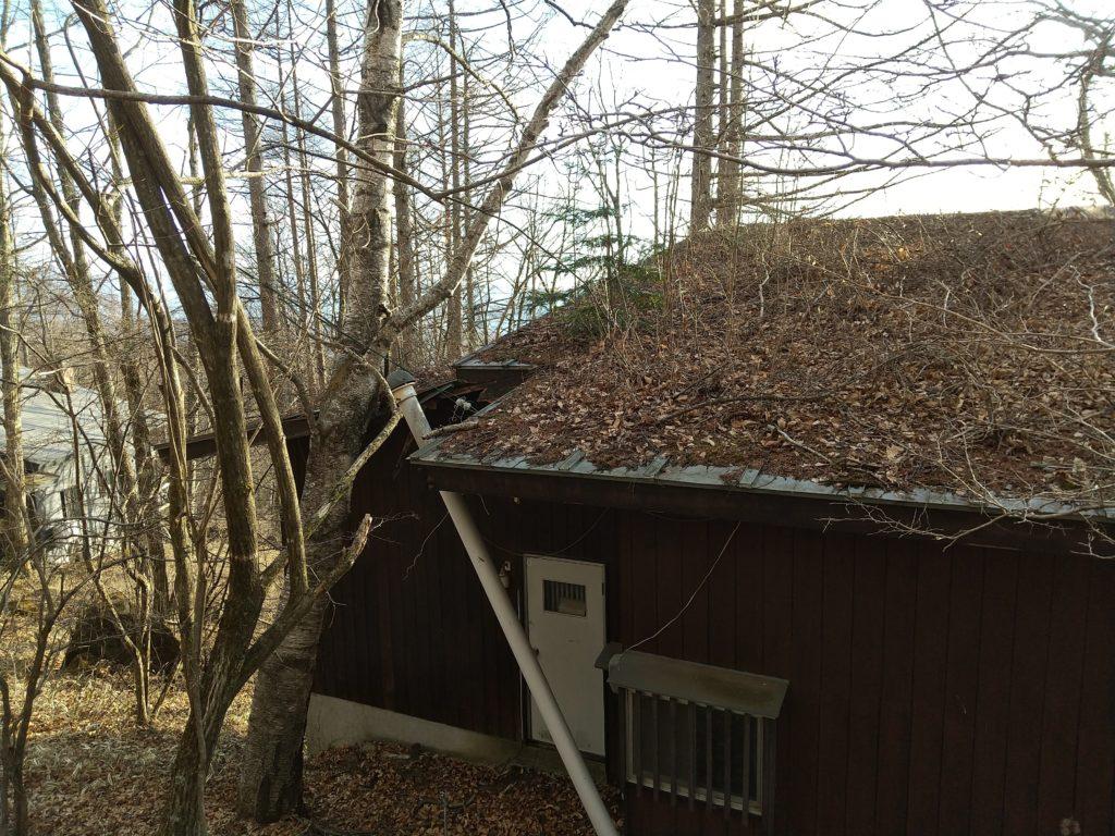 屋根の落ち葉の放置