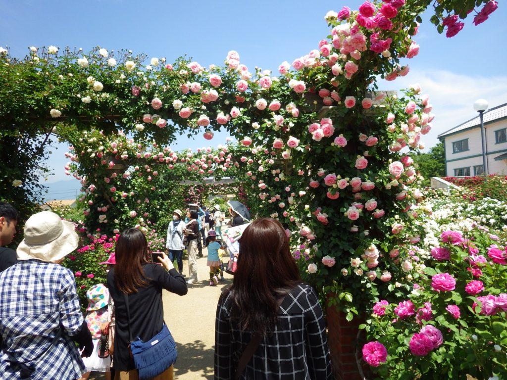 中野バラ祭り