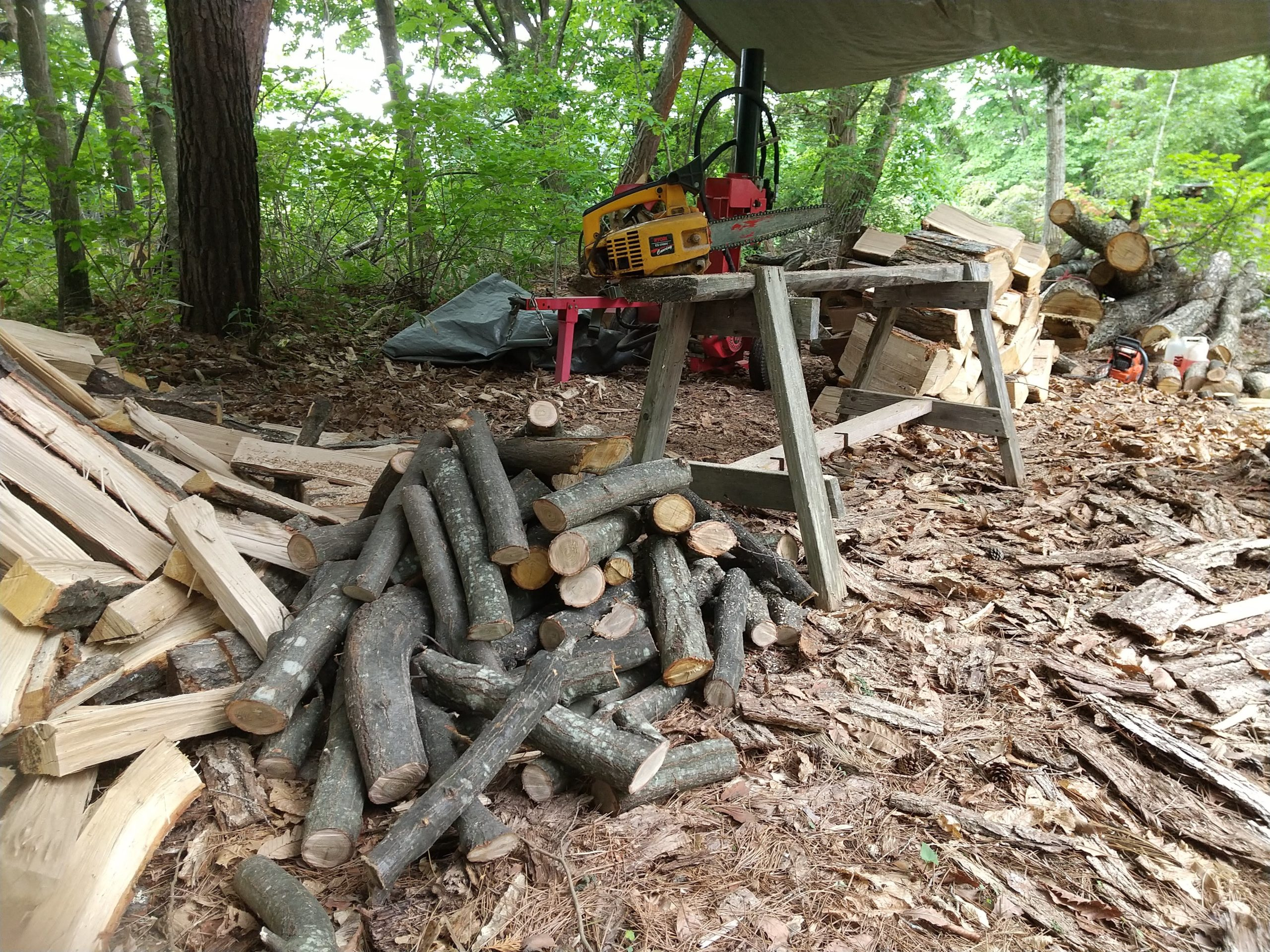 細い枝で薪を作る