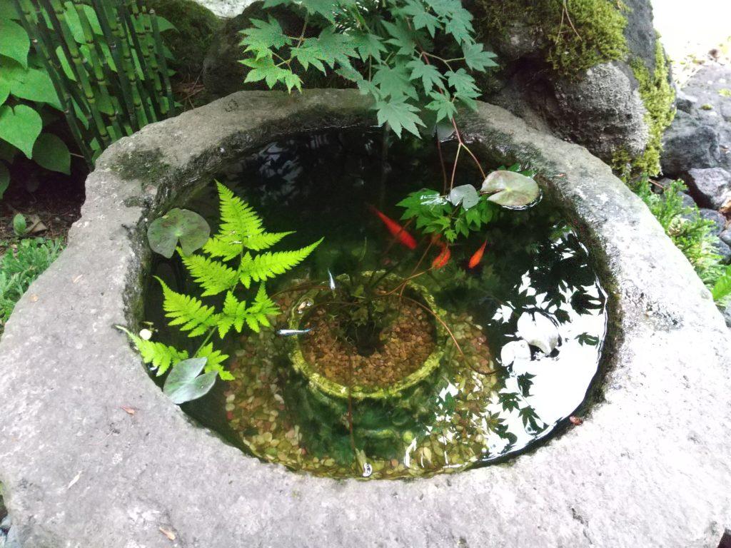 ウチのため池