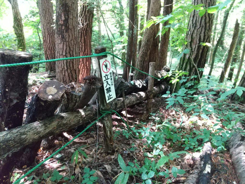 シカ柵代わりの原木