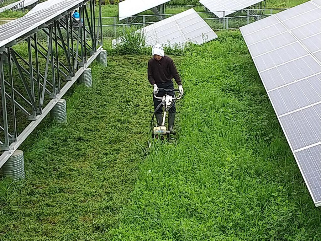スパイダーモアで太陽光発電所の草刈り