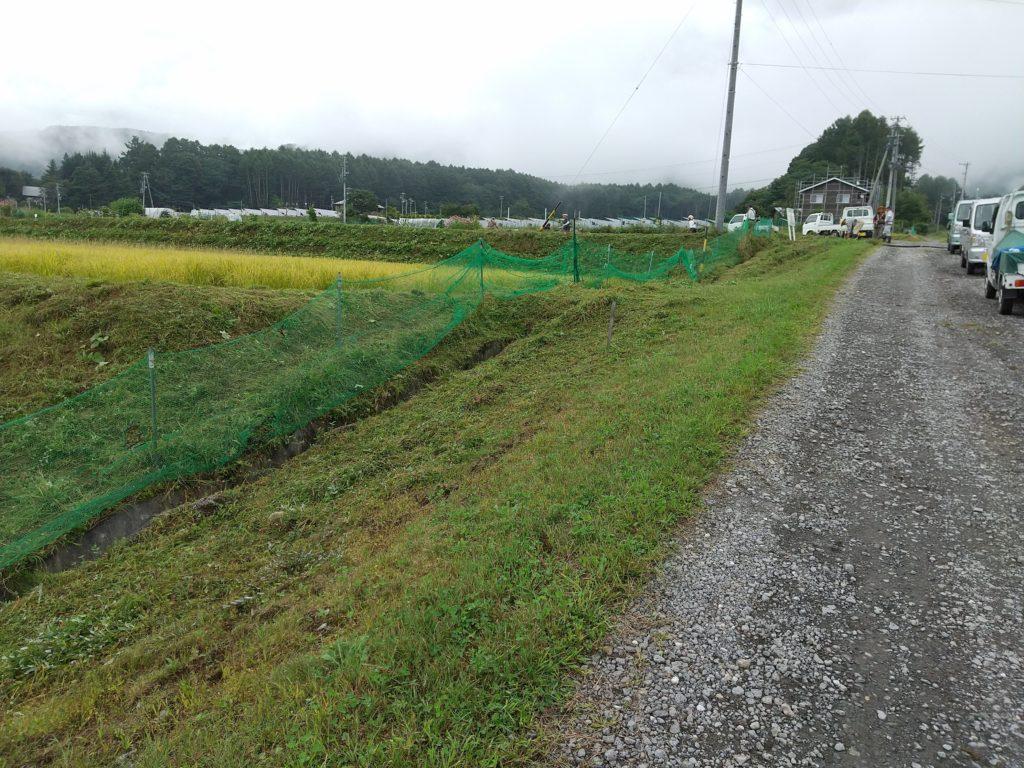 草刈りは道路まで