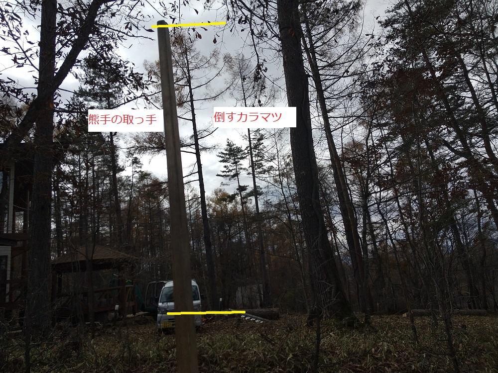 木の長さを測る