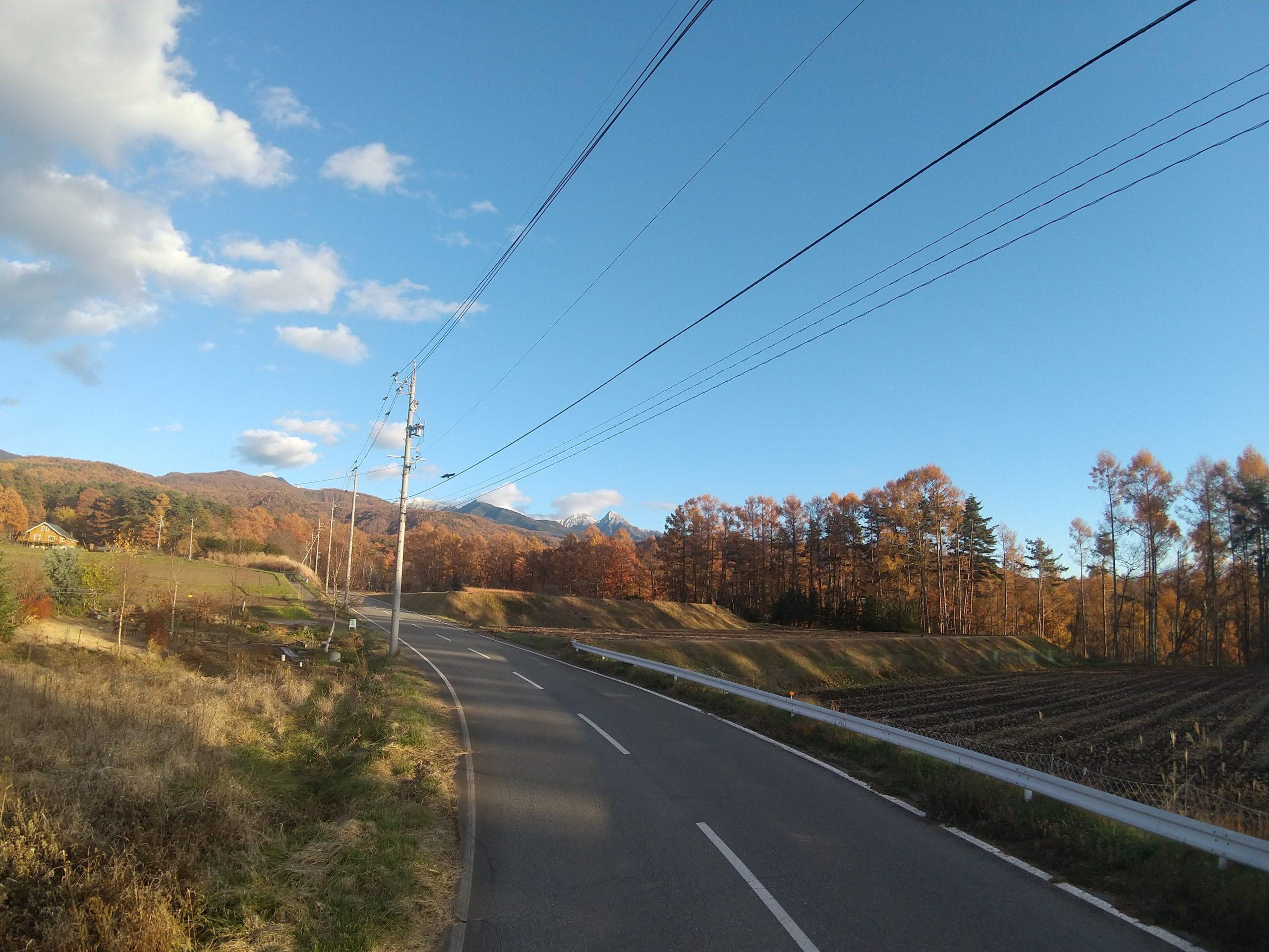カラマツの黄葉と阿弥陀岳