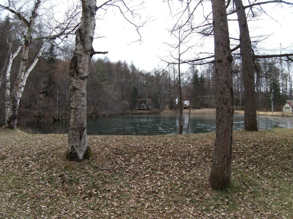 ウォールデン池のほとりで