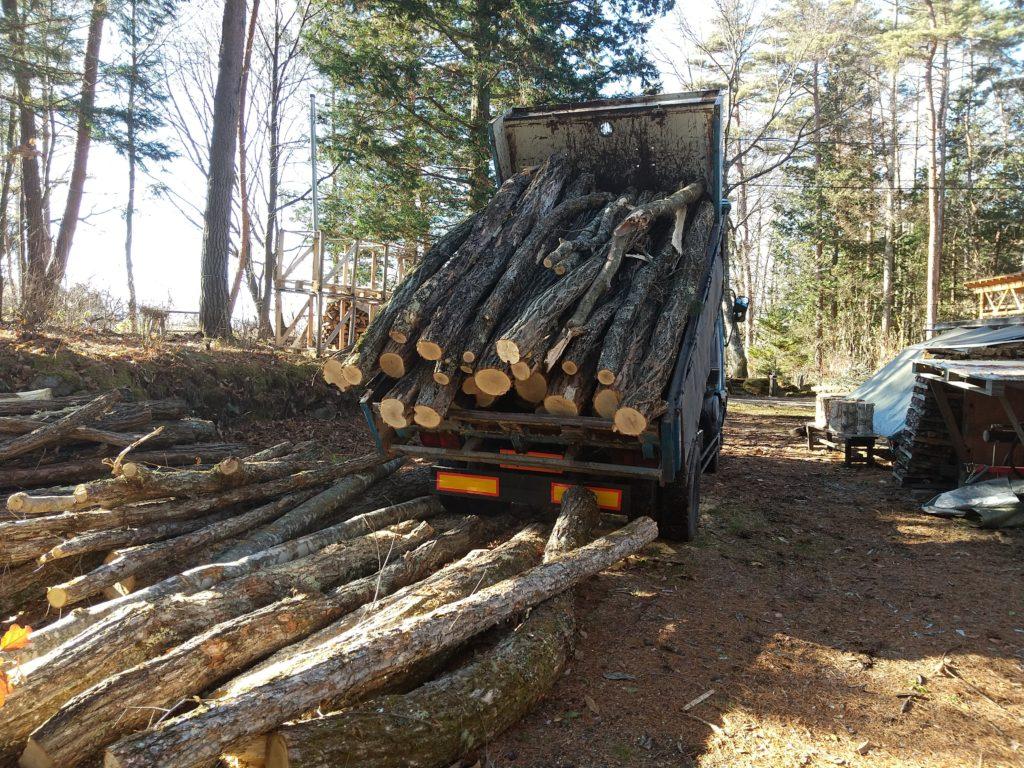大量の原木ゲット
