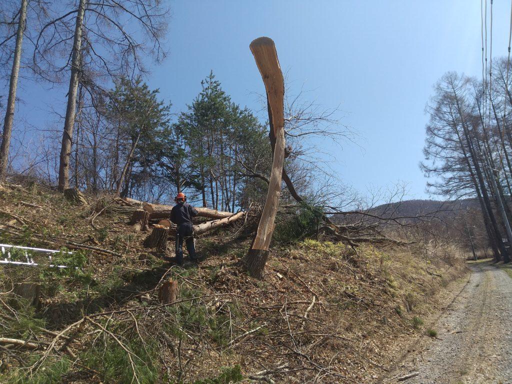 伐採の事故一歩手前