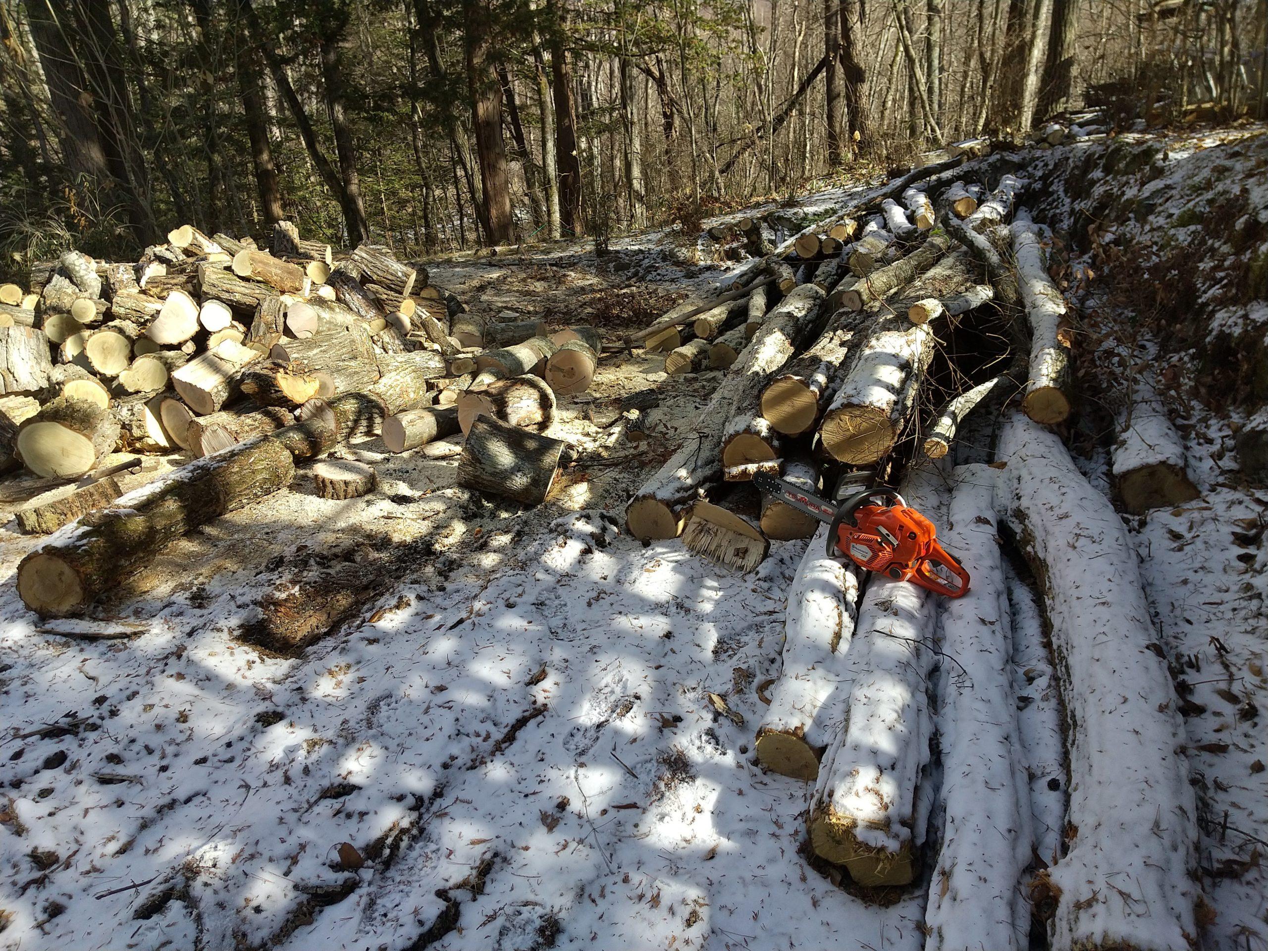 凍り付いた原木