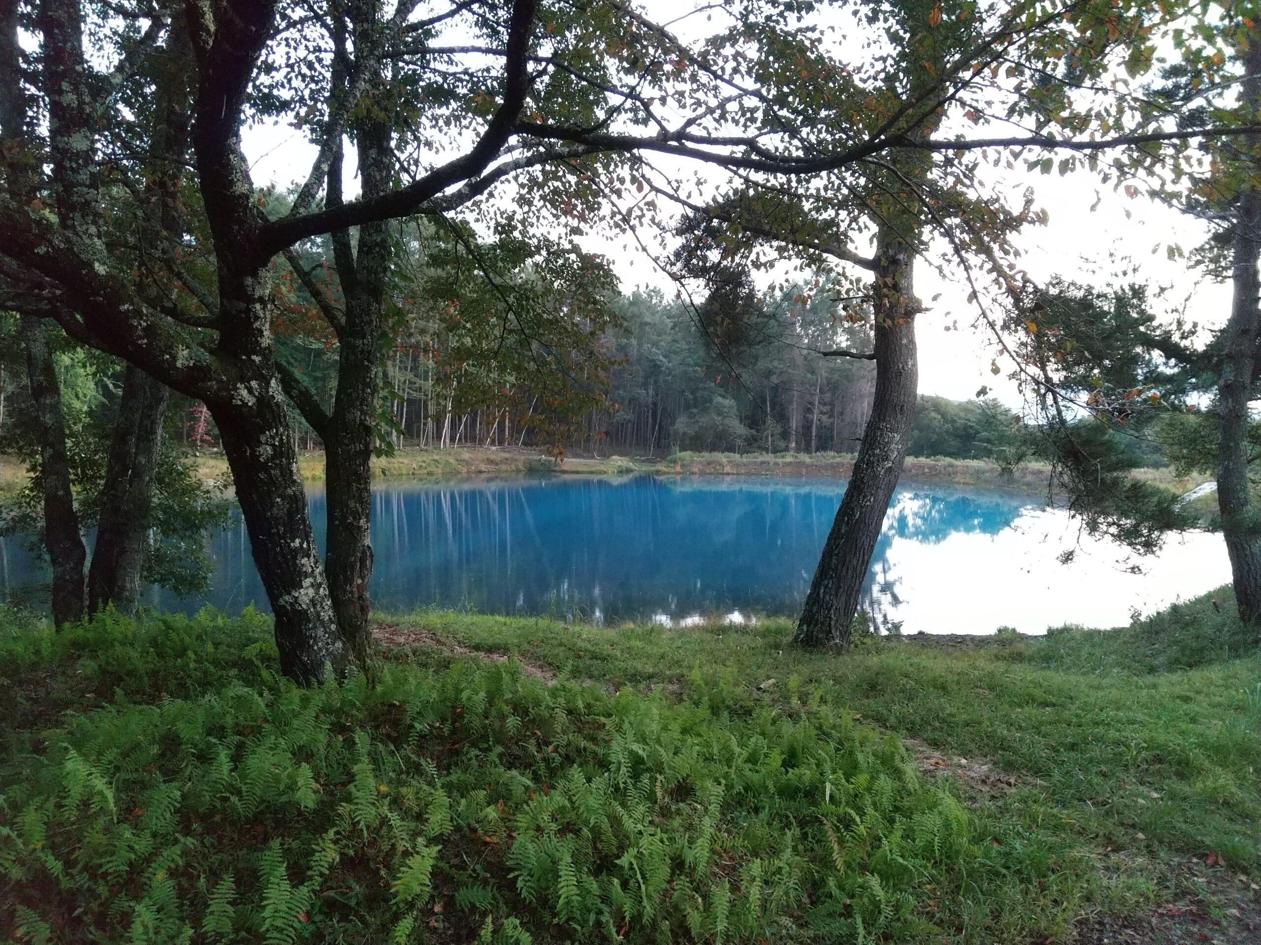 神秘的な色の笹原ため池