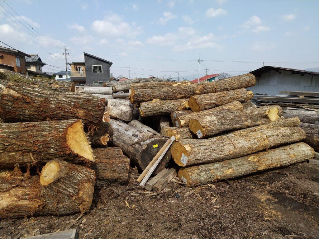 材木屋に競られたコナラ