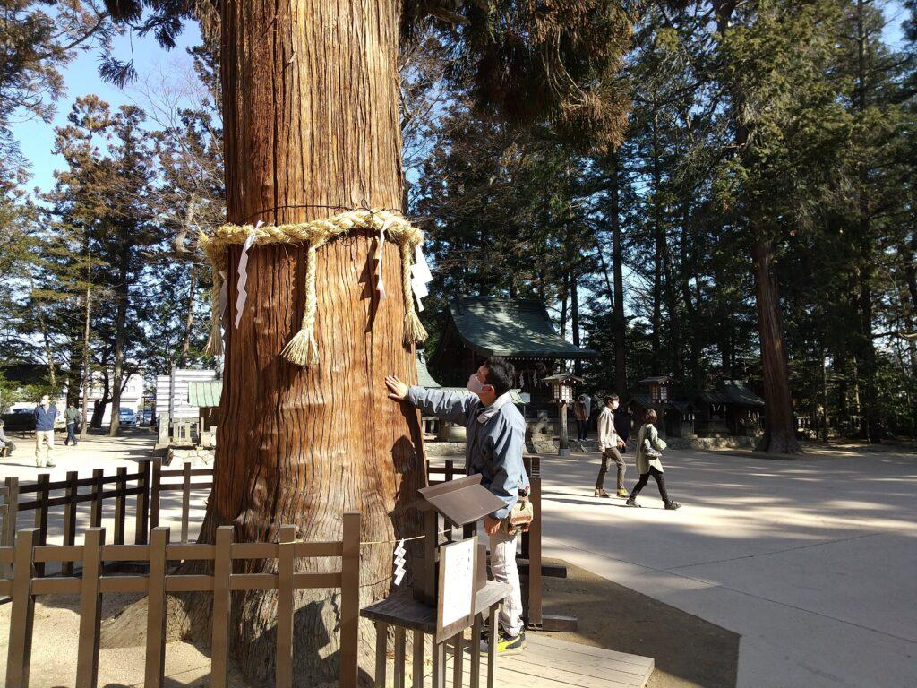 穂高神社のご神木