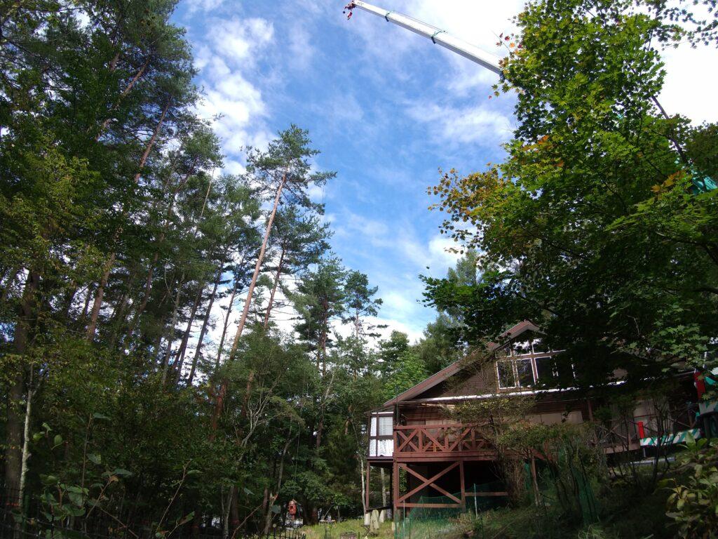 クレーンと伐採する木